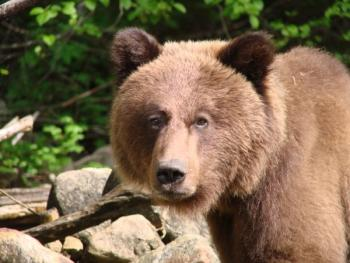 Wildlife Viewing - bears