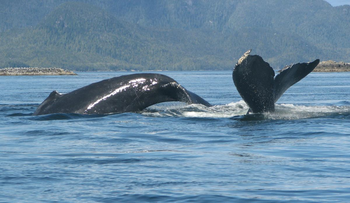 Wildlife Viewing - whales